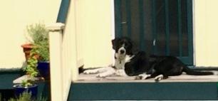 guarding back door 2
