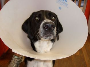 cone of shame 2