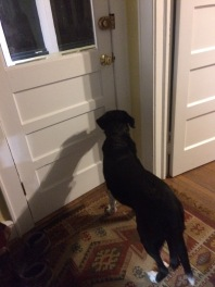 waiting at back door