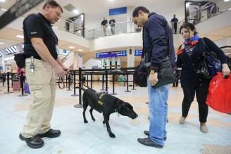 airport dog