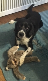 Pettigrew with sloth