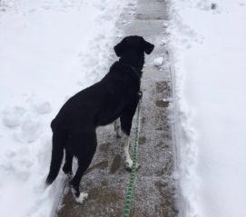 Pettigrew in snow 2