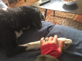 pettigrew and my hand
